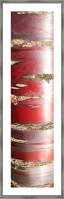 Bouleau Rouge Framed Print