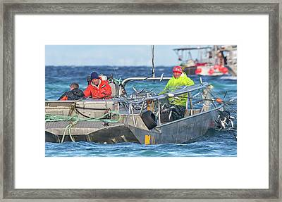 Framed Print featuring the photograph Bouncing Herring by Randy Hall