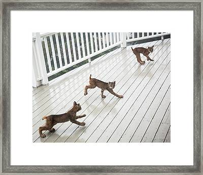 Bouncing Is Best Framed Print