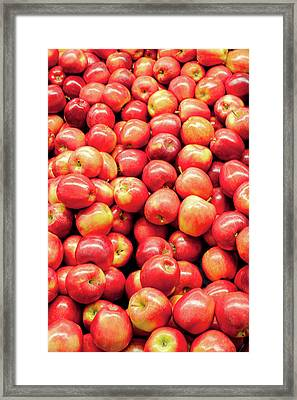 Bountiful Apples Framed Print