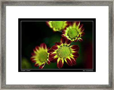 Bouquet Blooms Framed Print by Sarita Rampersad