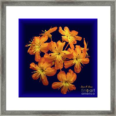 Framed Print featuring the digital art Bouquet In A Box by Donna Brown