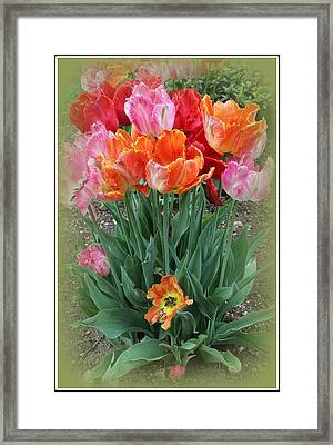 Bouquet Of Colorful Tulips Framed Print by Dora Sofia Caputo Photographic Art and Design