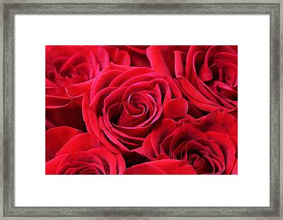 Bouquet Of Red Roses Framed Print