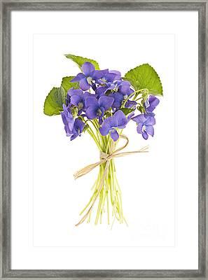 Bouquet Of Violets Framed Print by Elena Elisseeva