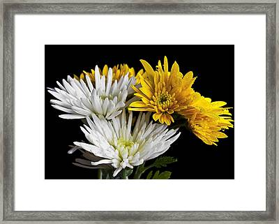 Bouquet Framed Print by Svetlana Sewell
