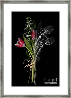 Bouquet X-ray Framed Print by Ted Kinsman