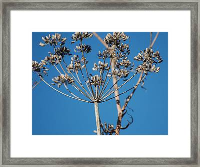 Bouquets Of Seeds Framed Print by Jean Booth