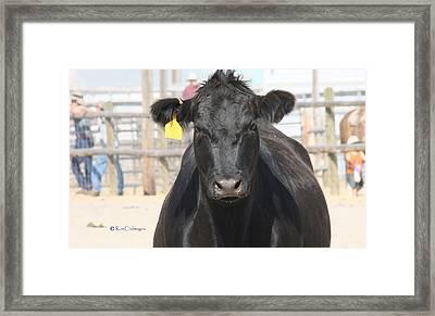 Bovine Bully Framed Print