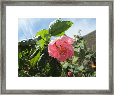 Bow In Pink Framed Print by Tina M Wenger
