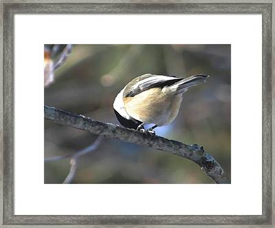 Bowing On A Branch Framed Print