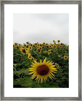 Bowing To The Crowd Framed Print by Jeanette Oberholtzer