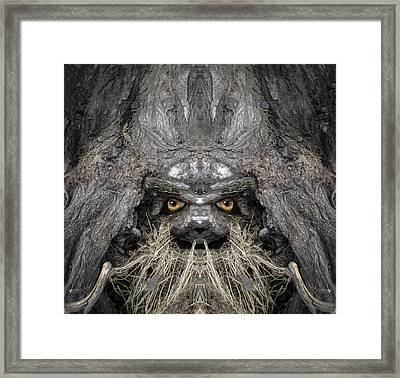 Bowtruckle 13 Framed Print by Rick Mosher