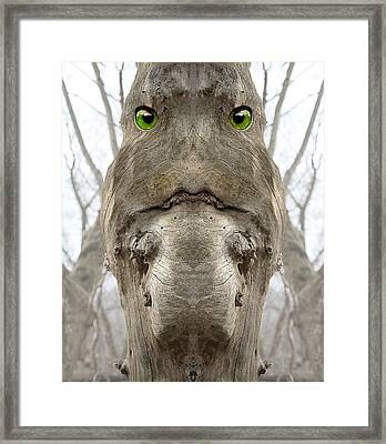 Bowtruckle 9 Framed Print by Rick Mosher
