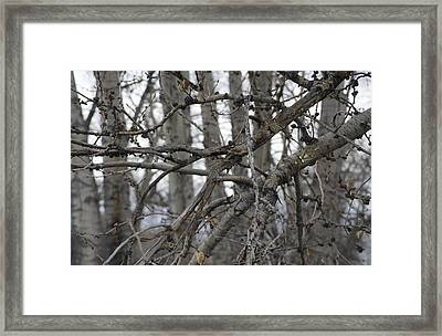 Bowtruckles In The Wild 1 Framed Print by Rick Mosher