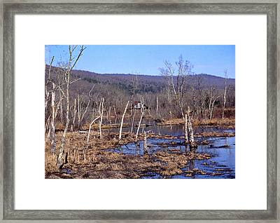 Boxely Swamp2 Framed Print by Curtis J Neeley Jr