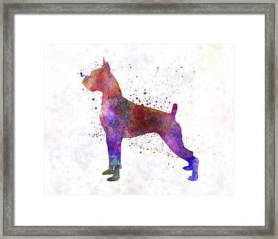 Boxer 01 In Watercolor Framed Print