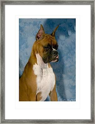 Boxer 151 Framed Print by Larry Matthews