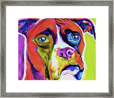 Boxer 5a By Nixo Framed Print