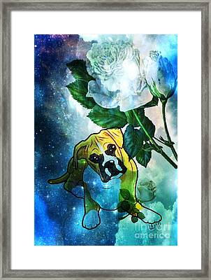 Boxer Art 17-01 Framed Print