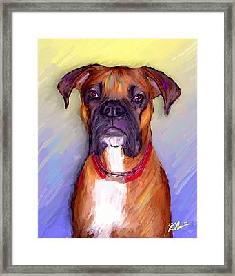 Boxer Beauty Framed Print by Karen Derrico