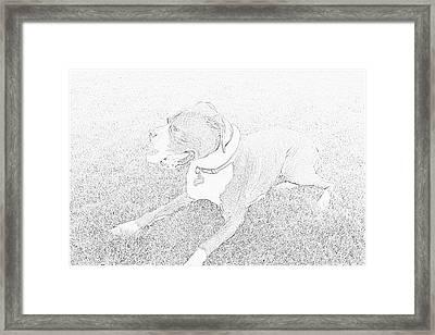 Boxer Brave Framed Print