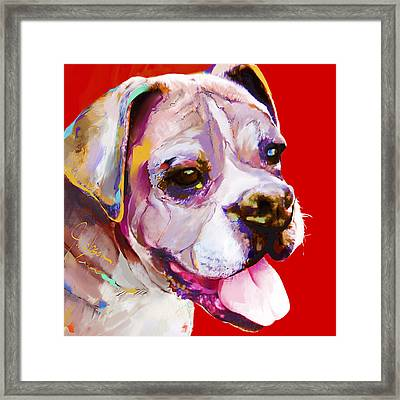 Boxer Dog  Framed Print by Jackie Jacobson
