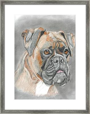 Boxer Framed Print by Don  Gallacher