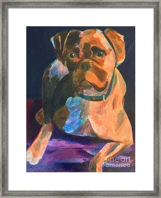 Boxer Framed Print by Donald J Ryker III