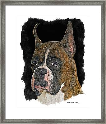 Boxer Framed Print by Larry Linton