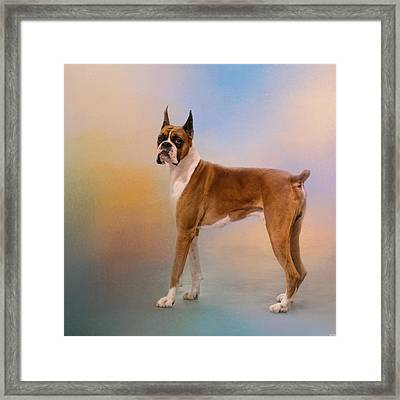 Boxer On A Beautiful Day Framed Print