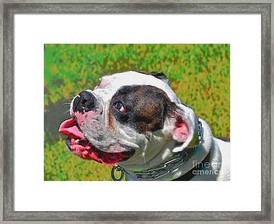 Boxer Portrait Framed Print by E Robert Dee