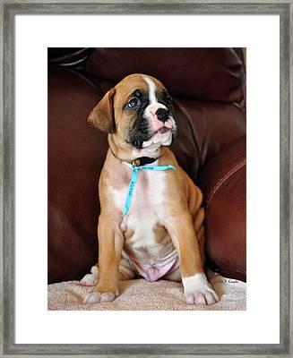 Boxer Pride Framed Print