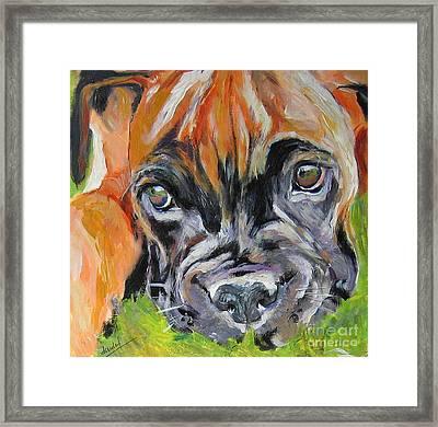 Boxer Pup Framed Print