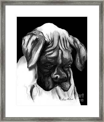 Boxer Puppy Framed Print by Enzie Shahmiri