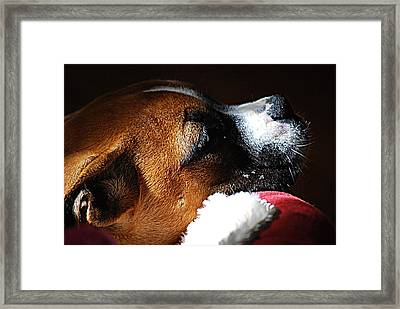Boxer Framed Print by Solomon Aseoche