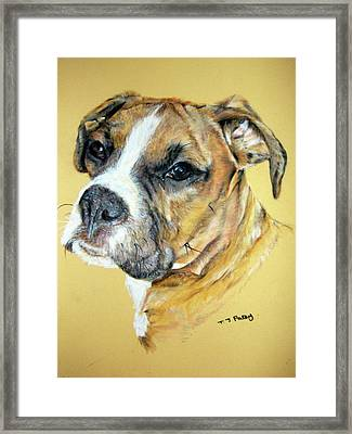 Boxer Framed Print by Tanya Patey