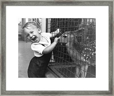 Boy Enchanted By Fawn Framed Print by Underwood Archives