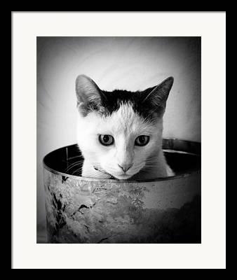 Faa Photographs Framed Prints