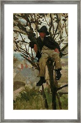 Framed Print featuring the painting Boy In A Tree by Henry Scott Tuke