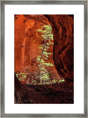 Boynton Canyon 07-034 Framed Print