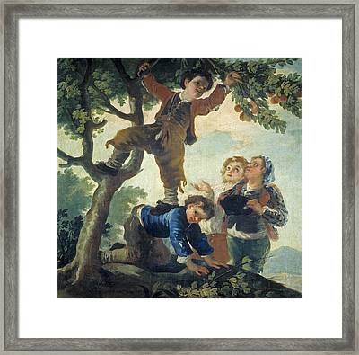 Boys Catching Fruit Framed Print