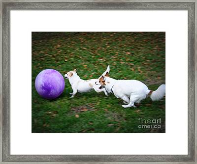 Boys Will Be Boys Framed Print by Mandy Shupp