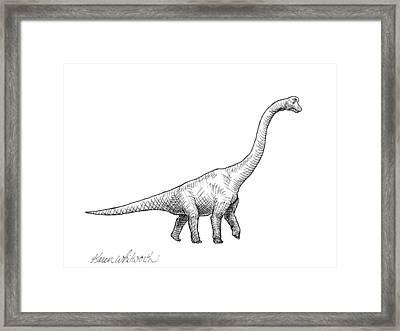 Brachiosaurus Black And White Dinosaur Drawing  Framed Print