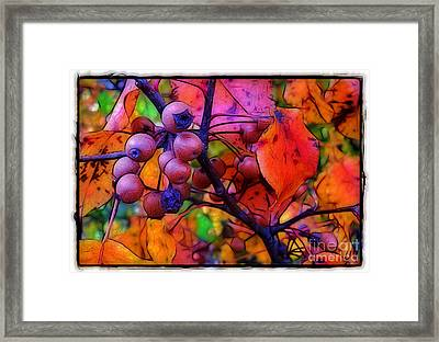 Bradford Pear In Autumn Framed Print