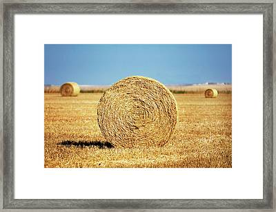 Brady Bales Framed Print by Todd Klassy