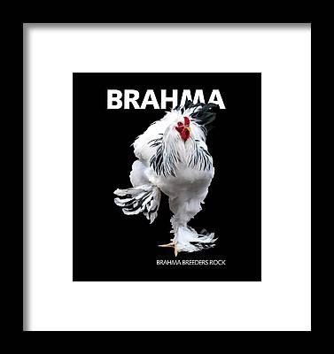 Light Brahma Framed Prints