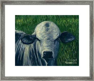 Brahma Bull  Framed Print