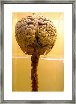 Brain Drain Framed Print by Jez C Self