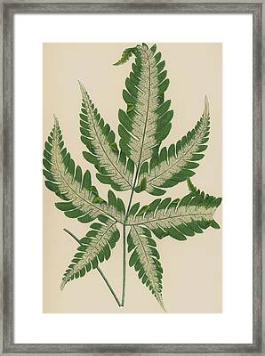 Brake Fern Framed Print